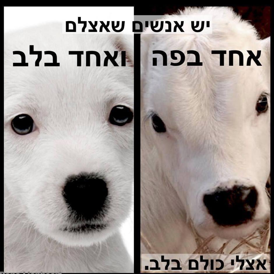 מה ההבדל בעצם, בין כלב ועגל? בסבל כולם שווים.