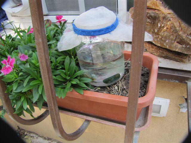 האבנים טוענות את המים בתוך בקבוק סגור על האדנית מחוץ לחלון. צילום: יעל נאמן-ברזם.