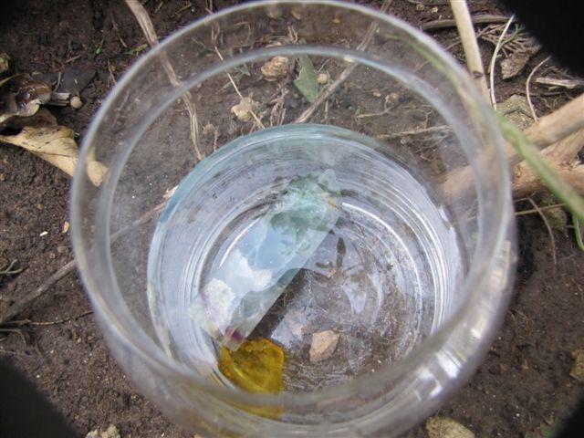 הכנת תמצית מפלואוריט וענבר לטיפול בדלקת החניכיים. צילום: יעל נאמן.