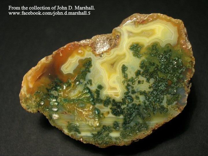 אגת מוס יפהפיה, מהאוסף של ג'ון מרשל האמריקאי. From the collection of John D. Marshall.