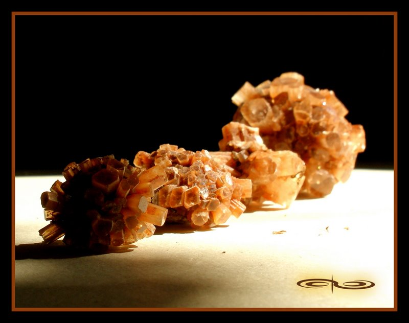 מושבות ארגונייט. צילום של מקס קובלסקי Photo by Max Kovalsky www.maxkovalski.com