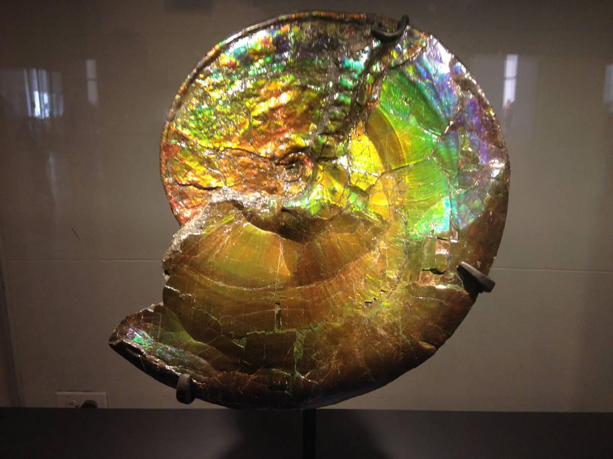 אמולייט, מבריקה בשלל צבעים. פריט במוזיאון הטבע וההיסטוריה בניו-יורק. צילום: מיכל ביאל.