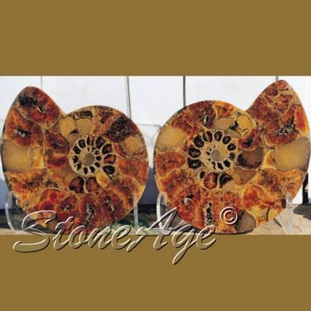 """אמונייט שחתוכה לזוג. מהאתר של """"סטונאייג"""" צילום: שני תודר. photo: Shani Toder www.stoneage.co.il"""