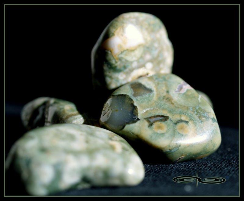 ג'ספר ריינפורסט. צילום: מקס קובלסקי Photo by Max Kovalski www.maxkov.com