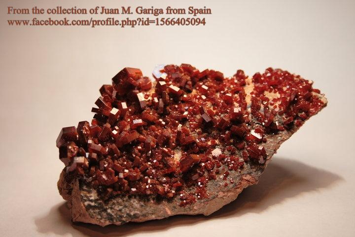 מושבה של וונדינייט. תמונה של האספן חואן מנואל גריגה מספרד.From the collection of Juan M. Gariga from Spain