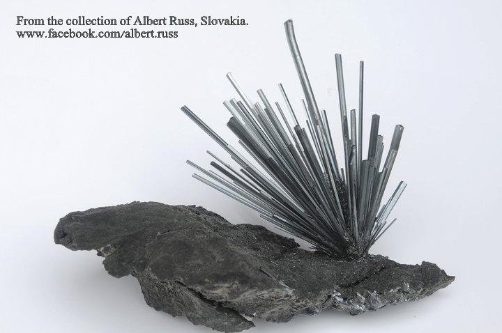 מושבה של סטיבנייט על מצע סלעי. מהאוסף של אלברט ראס מסלוקביה. From the collection of Albert Russ, Slovakia