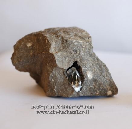 """יהלום הרקימר מטריקס. מציץ מתוך חלק הסלע בו נוצר. תמונה של חנות העבר """"עין החתול"""" בזכרון-יעקב."""