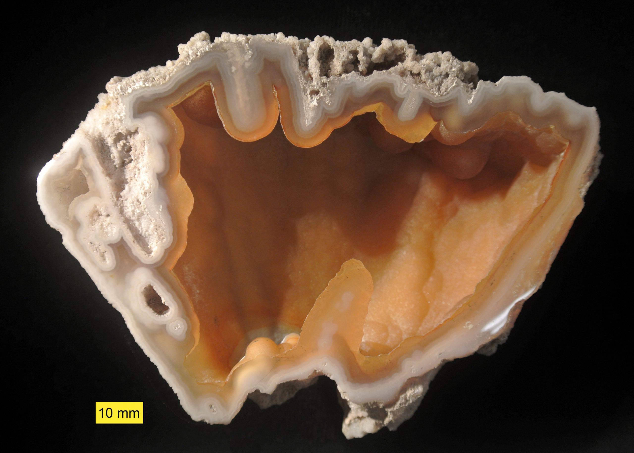 """מאובן של קורל שצופה באגת. מאיזור פלורידה. נלקח ברשות מ""""ויקיפדיה"""" From Wikipedia Commons"""