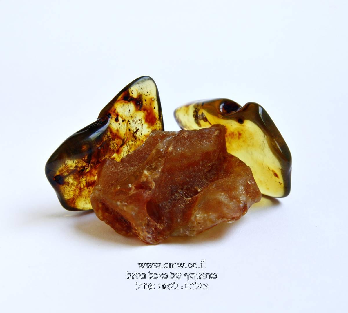 חלוקי ענבר בגוונים שונים. מהאוסף של מיכל ביאל. צילום: ליאת מנדל.