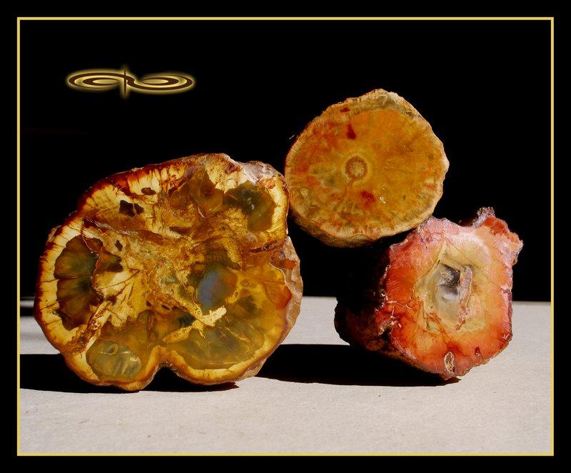 פריטי עץ-מאובן בצבעים שונים. צילום: מקס קובלסקי Photo by Max Kovalski www.maxkov.com