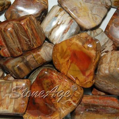 חלוקים ססגוניים של עץ מאובן. מהאתר של סטונאייג.  www.stoneage.co.il צילום: שני תודר photo: Shani Toder