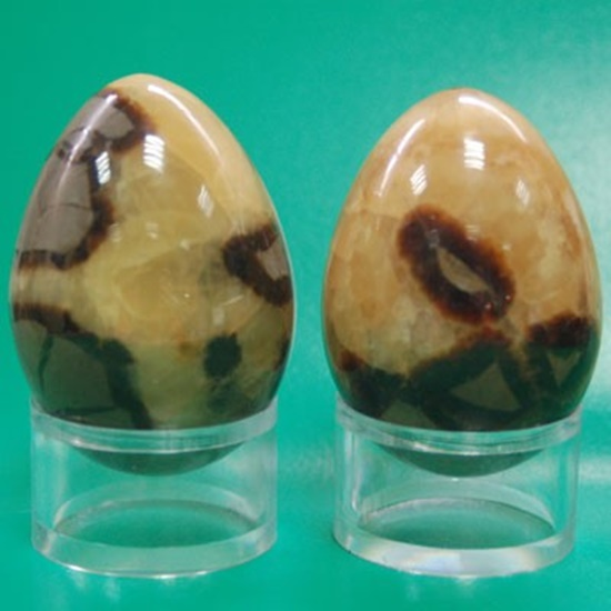 ביצי ספקטריה. מהאתר של החנות סטונאייג'  www.stoneage.co.il צילום: שני תודר photo: Shani Toder