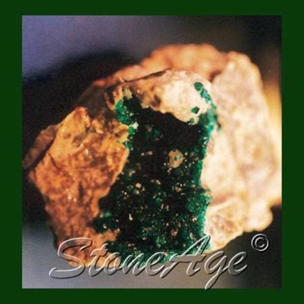 מושבת דיופטאז על מצע של סלע. מהאתר של החנות סטונאייג'  www.stoneage.co.il צילום: שני תודר photo: Shani Toder